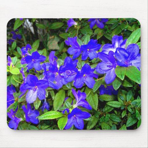 Blue Azalea Flowers Mouse Pads