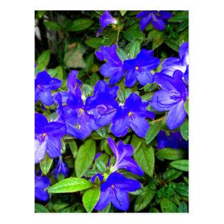 Blue Azalea Flowers Postcard