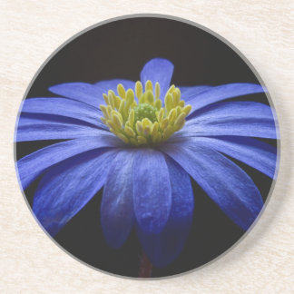 Blue Balkan Anemone flower Sandstone Coaster