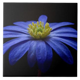 Blue Balkan Anemone flower Tile