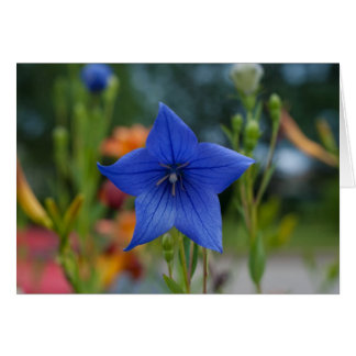 Blue Balloon Flower Card
