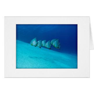 Blue Batfish Greeting Card
