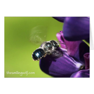 Blue Bee with Silver Fur Card