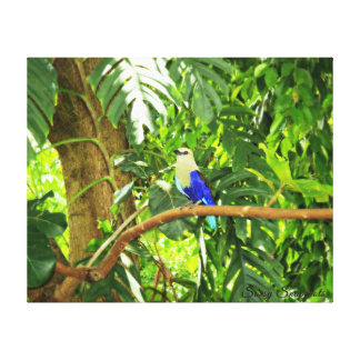 Blue Bellied Roller 20x16 Canvas Print