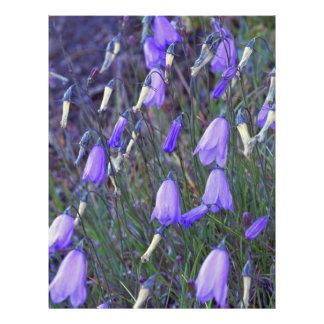 Blue Bells Flyers