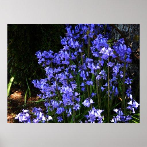Blue Bells Hyacinth ~Print~ Poster