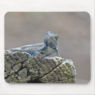 Blue Belly Alligator Lizard Mouse Pad