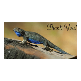 Blue Belly Scale Lizard Card