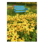 Blue bench in a field of  yellow black-eye Susans. Postcard