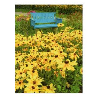 Blue bench in a field of  yellow black-eye Susans. Postcard