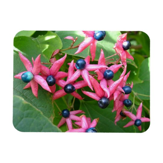 Blue Berries - Red Flowers Magnet