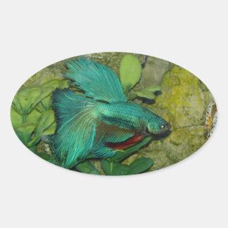 Blue Betta fish aquarium Stickers