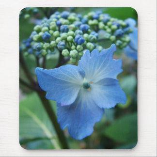 blue big leaf hydrangea flowers. mouse pad