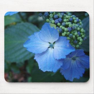 Blue bigleaf hydrangea flowers mouse pad