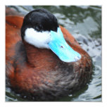 Blue Billed Duck Invitations