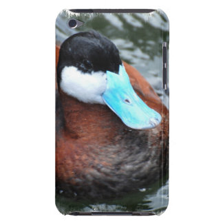 Blue Billed Duck iTouch Case iPod Case-Mate Cases