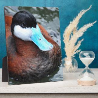 Blue Billed Duck Plaque
