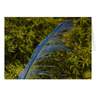 Blue Bird feather found on moss at GUM TREE FARM Card