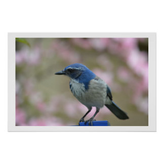 Blue Bird in Spring Posters