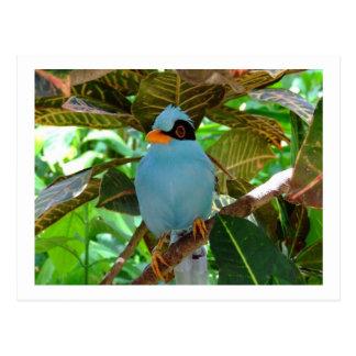 Blue Bird Photo Postcard