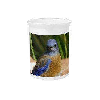 Blue bird pitchers