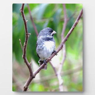 Blue Bird Plaque