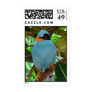 Blue Bird Postage Stamp