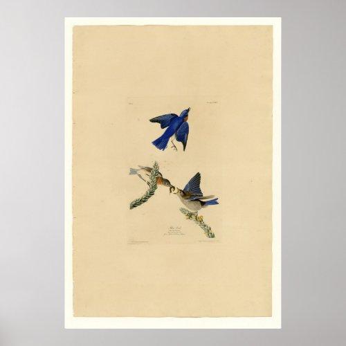 Blue Bird print