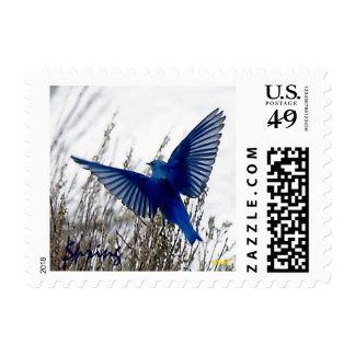 Blue Bird: Spring's Arrival Stamp