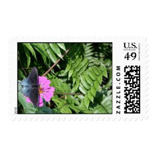 Blue black butterfly on purple flower, green leaf postage