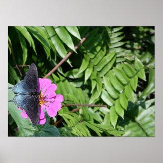 Blue black butterfly on purple flower, green leaf posters
