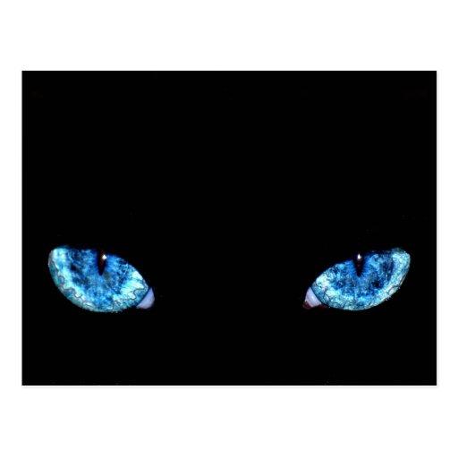 Blue Black Cat Eyes Postcard