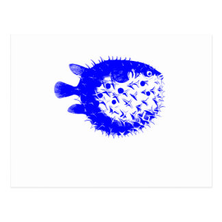 Blue BlowFish Multi-color Coral Sea Vibrant Color Postcard