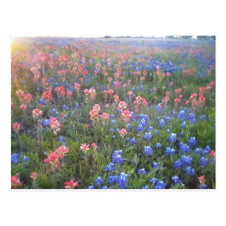 Blue Bonnets and Indian Paint Brushes Postcard