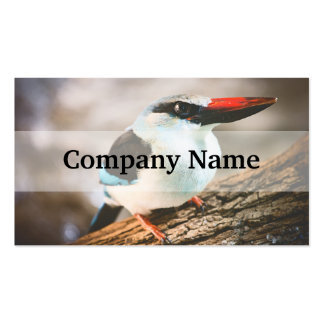 Blue Breasted Kingfisher Bird Photograph Double-Sided Standard Business Cards (Pack Of 100)