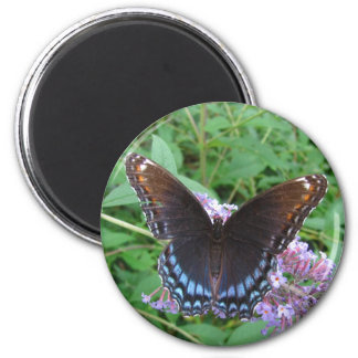 Blue & Brown butterfly ~ magnet