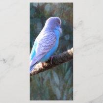 Blue Budgie Bird