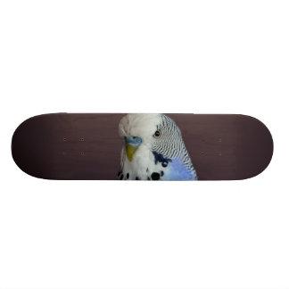 Blue Budgie Bird Animal Skateboard