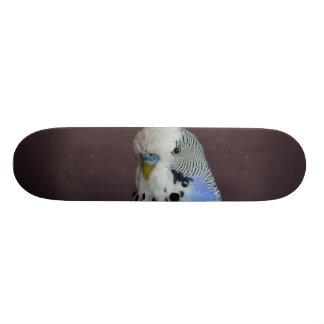 Blue Budgie Bird Animal Skateboard Deck
