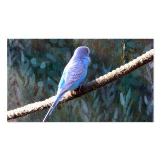 Blue Budgie Bird Business Card Templates