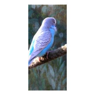 Blue Budgie Bird Rack Card Template