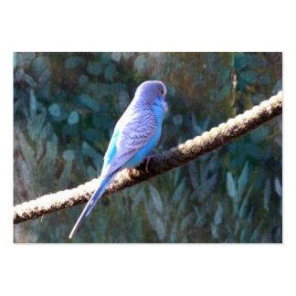 Blue Budgie Business Card