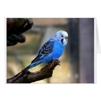 Blue Budgie Card