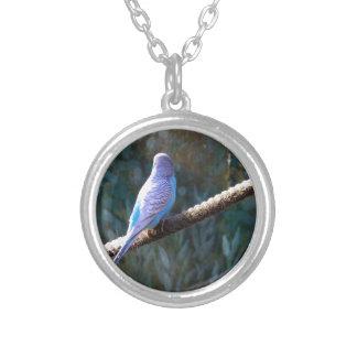 Blue Budgie Jewelry