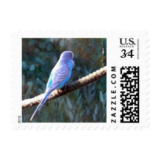 Blue Budgie Postage Stamp