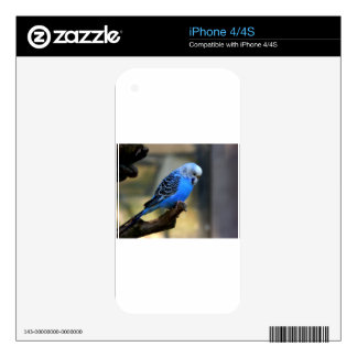 Blue Budgie Decals For The iPhone 4