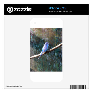 Blue Budgie Skin For iPhone 4