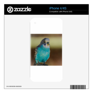 Blue Budgie Skins For The iPhone 4S