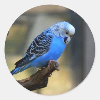 Blue Budgie Round Sticker