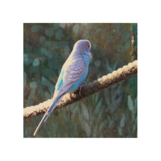 Blue Budgie Wood Canvases